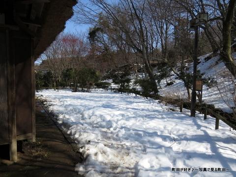 20140222018フクジュソウと雪@薬師池公園