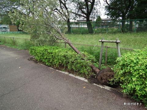 2011092304頭上注意、台風の傷跡@恩田川