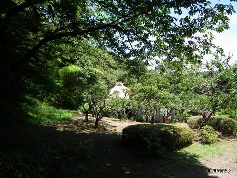 20110723064薬師池公園・旧永井家住宅の茅葺屋根
