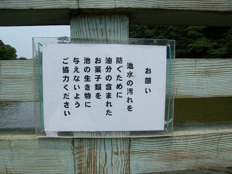 20090613099.jpg 薬師池の願い