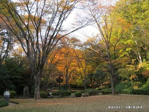 2013112440芹ヶ谷公園の不思議な紅葉