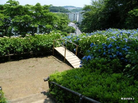 20100612153町田えびね苑<アジサイ>