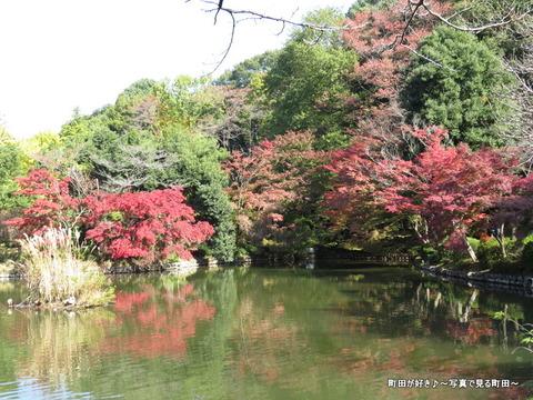 20131116020薬師池公園の紅葉