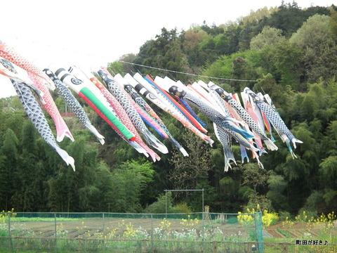 20120422020平成24年第9回鶴見川泳げ鯉のぼり