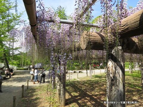 20140428159薬師池公園の藤の花
