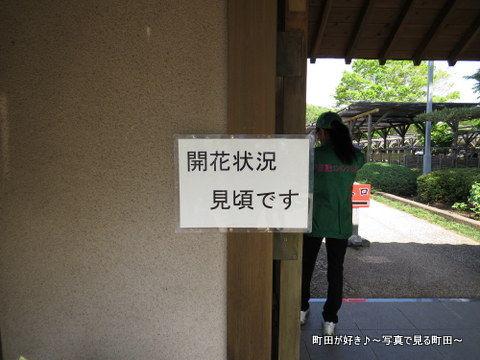 20140428092町田ぼたん園
