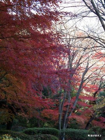 20101204058紅葉の薬師池公園