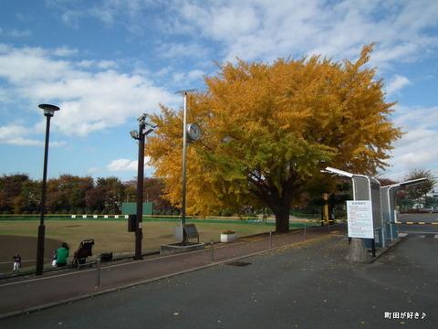 2010112156イチョウ町田市民球場