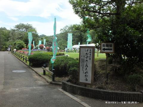 2013070647薬師池公園「ほおずき・あさがお市」