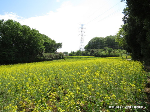 20140428079七国山の菜の花畑