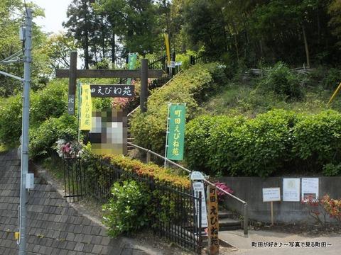 20130429111町田えびね苑、2013年開花の様子
