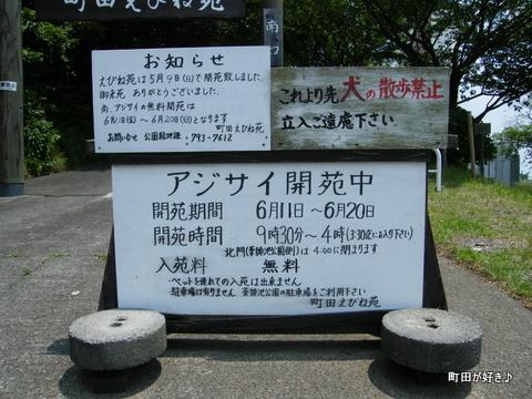 20100612057町田えびね苑<アジサイ>