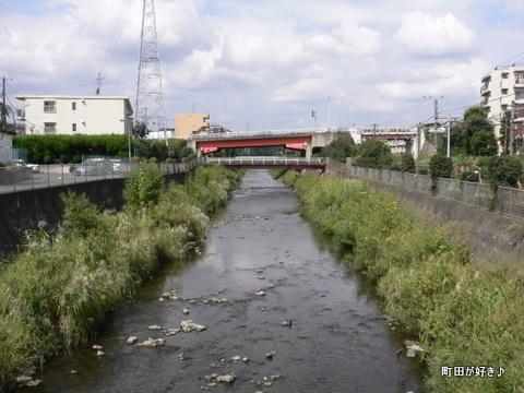 2009092311 境川を歩く ススキ