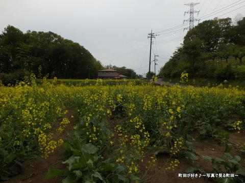 20130420082七国山の菜の花