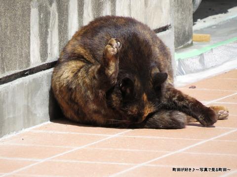 2014031529今日のにゃんこ@小田急町田駅東口
