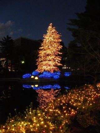 2008120629.jpg 玉川学園クリスマスツリー