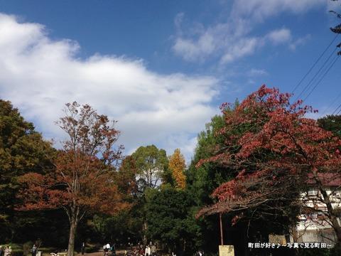 2014110313秋の芹ヶ谷公園の風景