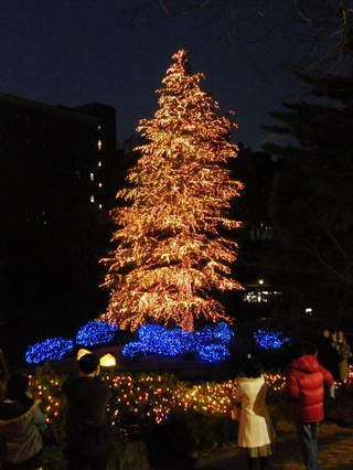 2008120628.jpg 玉川学園クリスマスツリー
