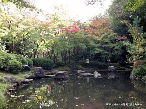 2014110304秋の芹ヶ谷公園の風景