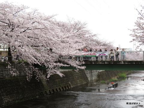 2016040310恩田川の桜