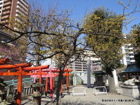 2014030827サンシュユ(山茱萸)