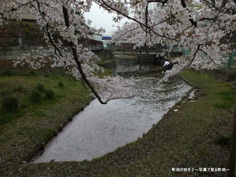 20130330119弁天橋公園のサクラが綺麗でした