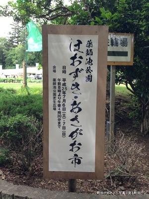2013070648薬師池公園「ほおずき・あさがお市」