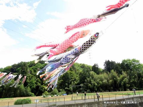 20140428025鶴見川泳げ鯉のぼり