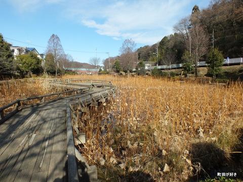 2012122459冬の薬師池公園