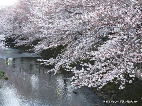20140330178恩田川沿いの桜並木