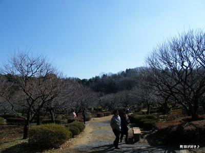 20100130032薬師池公園梅
