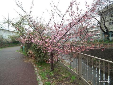 2012032422南大谷中まえの早咲きの桜