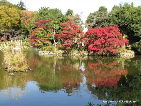 20131116031薬師池公園の紅葉