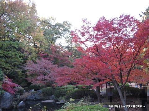 2013112431芹ヶ谷公園の不思議な紅葉