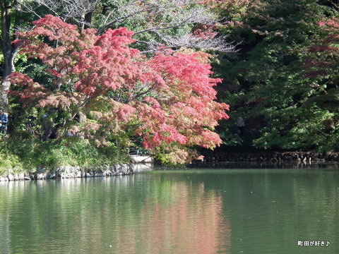 2010110349秋の薬師池公園