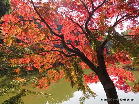 20131116042薬師池公園の紅葉