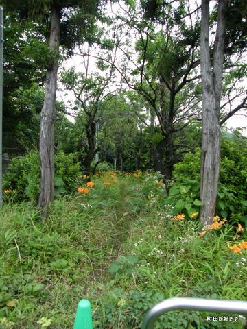 2010071132ヤブカンゾウ薮萱草高ヶ坂石器時代遺跡