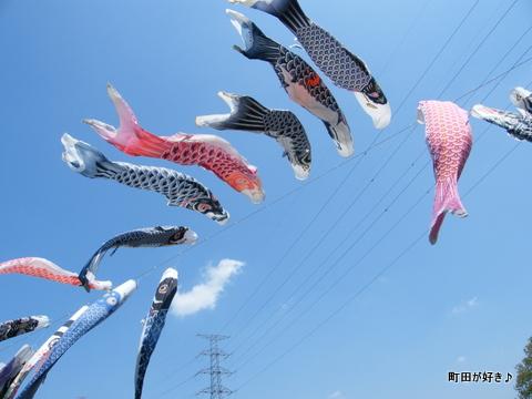 20100425035平成22年第7回鶴見川泳げ鯉のぼり