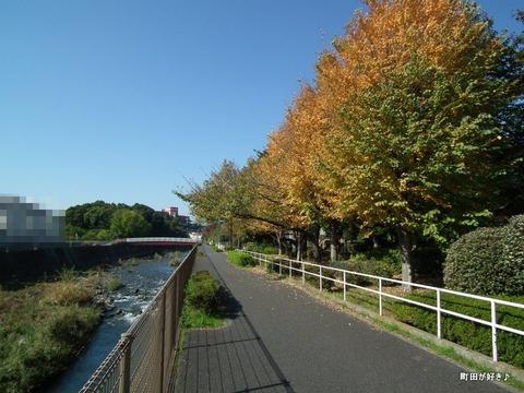 20101106064境川金田西田橋公園