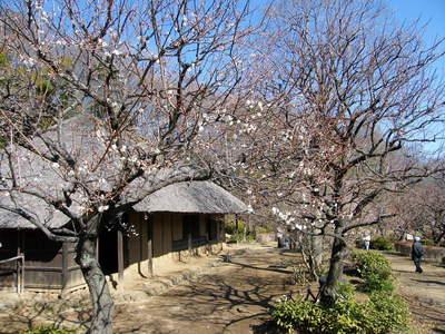 20090208025.jpg 薬師池公園の梅の花