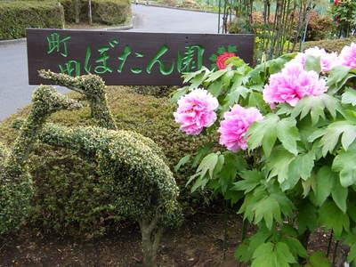 20090418043.jpg 町田ぼたん園