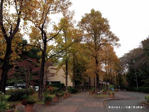 2015103101色付く町田市立国際版画美術館