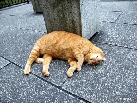 20100619306野良猫@横浜公園