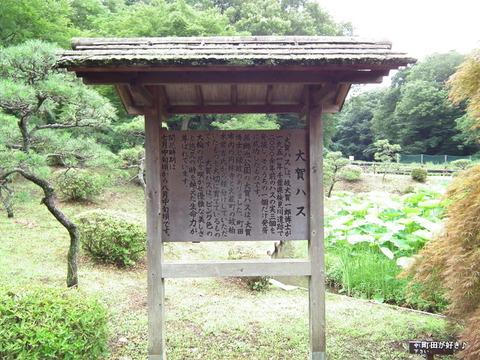 2012071423薬師池公園の大賀ハス