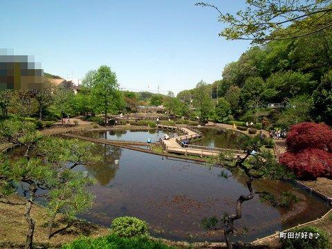 20110424161薬師池公園のハス田