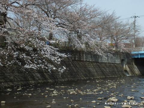 2013032050恩田川の桜@高瀬橋