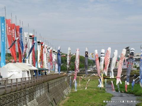 20140428048鶴見川泳げ鯉のぼり