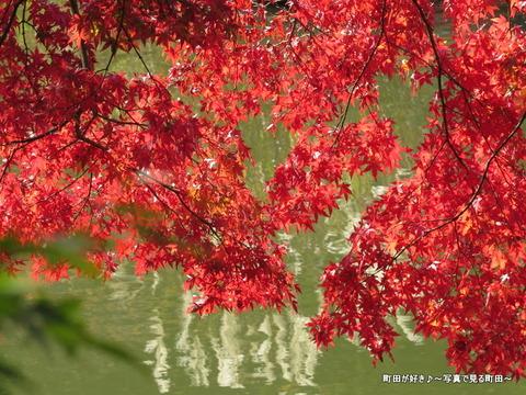 20131116040薬師池公園の紅葉
