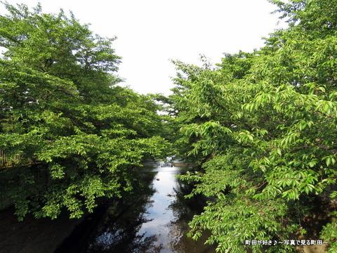 2015053120今日の恩田川の風景