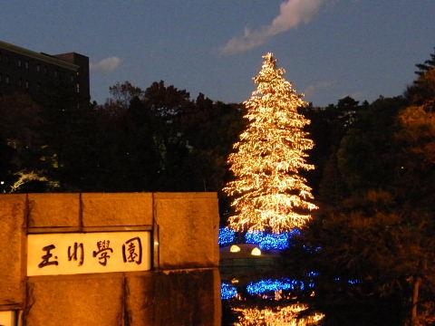 2008120621.jpg 玉川学園クリスマスツリー